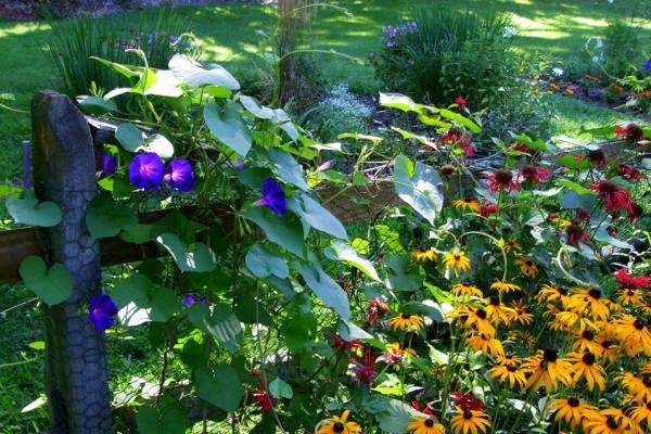 Wimbledon Guild Secret Garden Walks Love